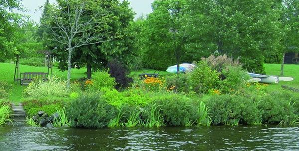 Myrique beaumier (voir les 4 touffes denses vert grisé qui touchent à l'eau)