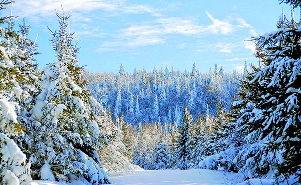 « Après la tempête vinrent les jours clairs, glacials et le ciel était plus blanc à cause de la neige et la neige faisait miroiter le blanc et le bleu du ciel » Zinaïda Nikolaïevna Hippius (1869-1945) poétesse, critique littéraire, dramaturge et écrivaine russe. Photo par Charlie McKenzie
